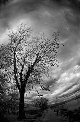 Photograph - Tree 4 by Simone Ochrym