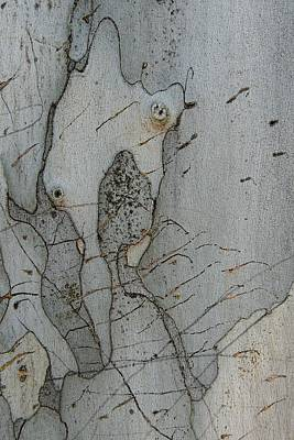 Photograph - Tree Sketching by Denise Clark