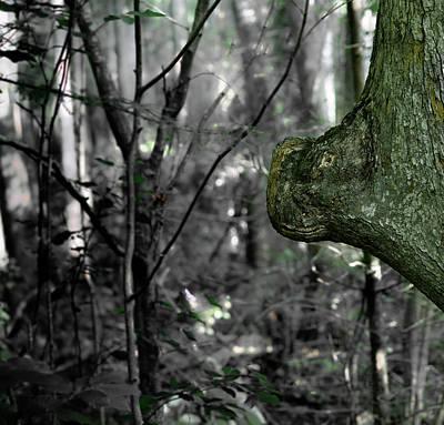 Photograph - Tree Skorpiovenator  by Douglas Barnett