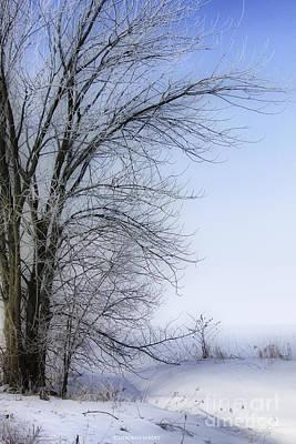 Tree-snow-fog Art Print by Deborah Benoit