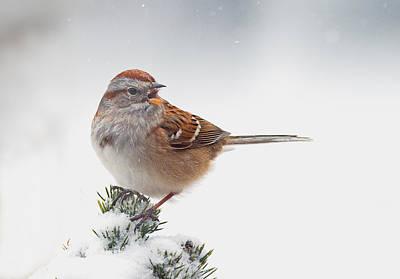 Photograph - Tree Sparrow Calling by Jim Zablotny