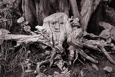 Tree Roots Digital Art - Tree Spider by Christine Lake