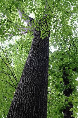 Photograph - Tree Spirit by Kathi Mirto