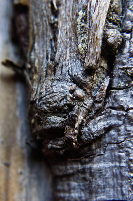 Photograph - Tree Sprite by Adria Trail