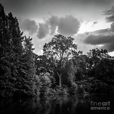 Photograph - Tree Standing Tall by Marilyn Nieves