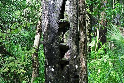 Photograph - Tree Steps by Michiale Schneider