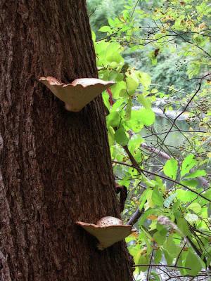 Photograph - Tree Steps by Scott Hovind