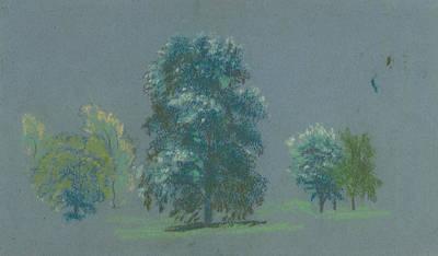 Drawing - Tree Study by Arthur Bowen Davies