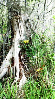 Photograph - Tree Stump And Flowers - Naturescape by Marie Jamieson