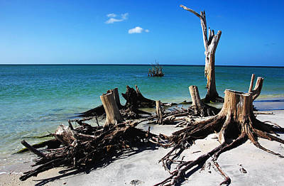 Photograph - Tree Stump Beach by Debbie Oppermann