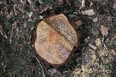 Photograph - Tree Stump by Dariusz Gudowicz