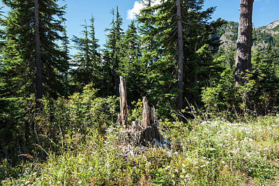 Photograph - Tree Stump Near Picture Lake by Tom Cochran