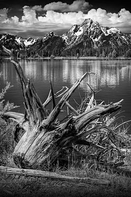 Photograph - Tree Stump On The Northern Shore Of Jackson Lake In Black And White by Randall Nyhof