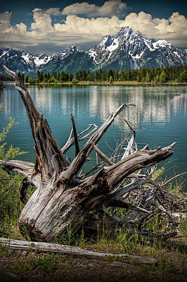 Photograph - Tree Stump On The Northern Shore Of Jackson Lake by Randall Nyhof