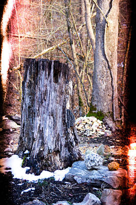 Tree Stump Retro Image Art Print by Robert Kinser