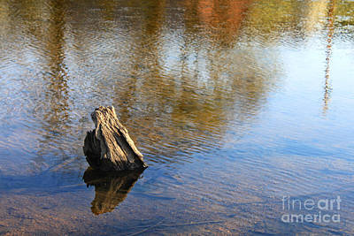 Photograph - Tree Stump Surrounded By Water by Todd Blanchard