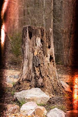 Tree Stump With Retro Light Leaks Art Print by Robert Kinser