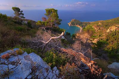 Photograph - Tree Stumps Overlook by Giovanni Allievi