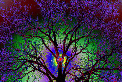 Photograph - Tree Sun Ice Colors by Warren Sarle