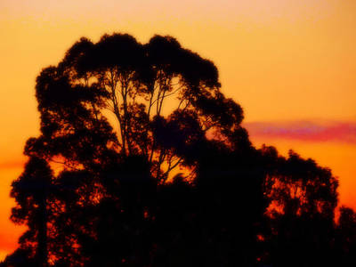 Photograph - Tree Sunset by Mark Blauhoefer