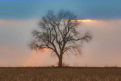 Photograph - Tree - Sunset by Nikolyn McDonald
