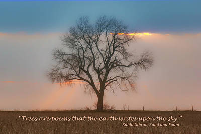 Photograph - Tree - Sunset - Quotation by Nikolyn McDonald