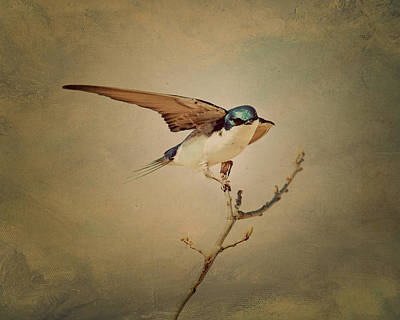 Swallow Photograph - Tree Swallow 3 by Al  Mueller