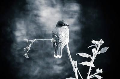Photograph - Tree Swallow by Christina Dutkowski
