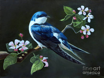 Birds Royalty-Free and Rights-Managed Images - Tree Swallow by Jeanne Newton Schoborg