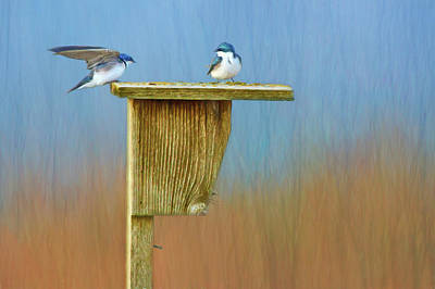 Photograph - Tree Swallows - Nest Box by Nikolyn McDonald