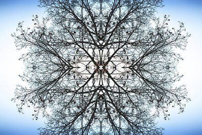 Photograph - Tree Symmetry Abstract In Blue And White by John Williams