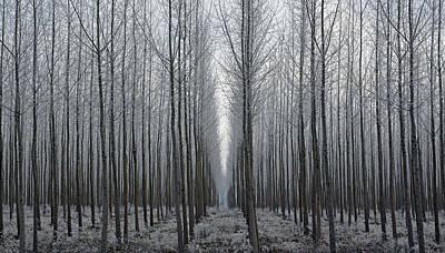 Tree Symmetry Art Print