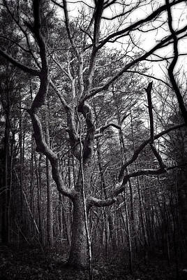 Photograph - Tree Terror by George Taylor