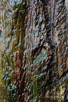 British Columbia Photograph - Tree Texture 11 by Terry Elniski
