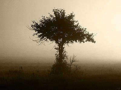 Photograph - Tree Through The Mist by Stuart Turnbull