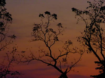 Art Print featuring the photograph Tree Top After Sunset by Donald C Morgan