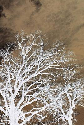 Photograph - Tree Top Right Diptych by Ellen Barron O'Reilly