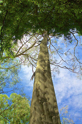 Photograph - Tree Top by SC Heffner