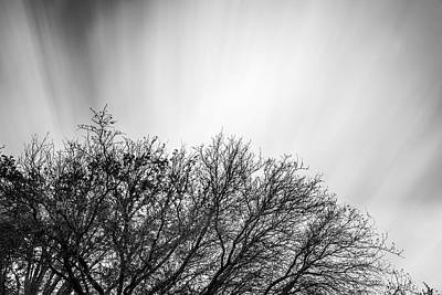 Photograph - Tree Top With Moving Clouds by Todd Aaron