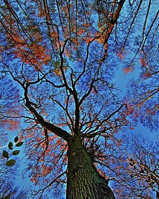 Taunus Photograph - Tree Tops by Daniel Koglin