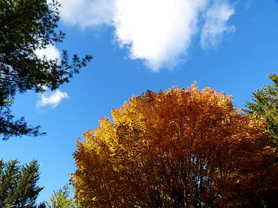 Silhouette Photograph - Tree Tops In October Sky by Abstract Angel Artist Stephen K