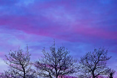 Photograph - Tree Tops In The Sunset by Sandra Foster