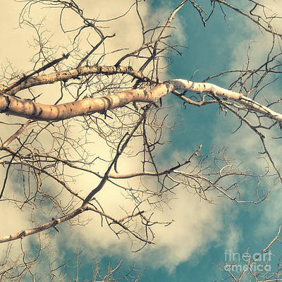 Tree Tops 3 Art Print by Priska Wettstein