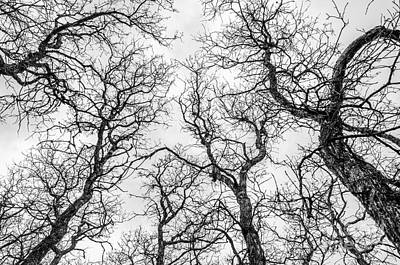 Photograph - Tree Tops by Sue Smith
