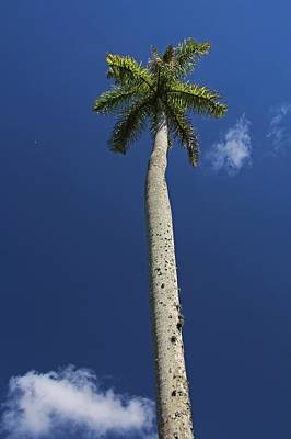 Photograph - Tree Tower by Michiale Schneider