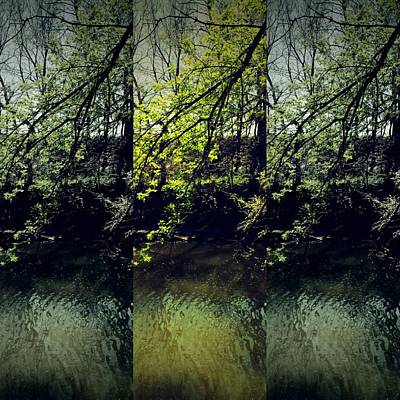 Photograph - Tree Triptych by Michele Carter