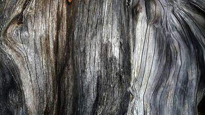 Photograph - Tree Trunk Abstract Detail by Nareeta Martin