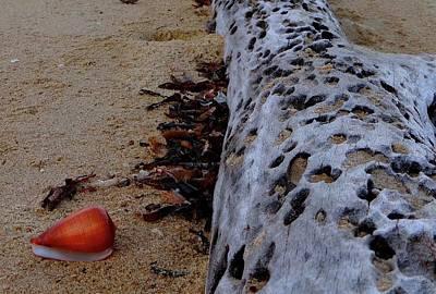 Exploramum Wall Art - Photograph - Tree Trunk And Shell On The Beach Full Size 1 by Exploramum Exploramum