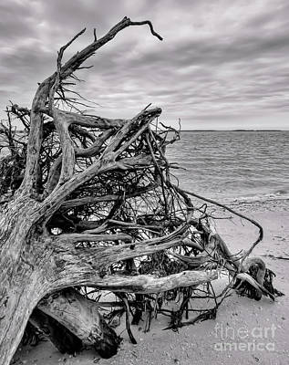 Photograph - Tree Trunk And Sky, Sanibel Island, Florida  -80040-bw by John Bald
