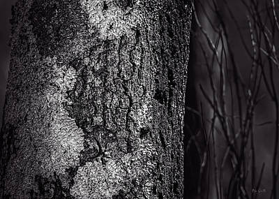 Photograph - Tree Trunk by Bob Orsillo